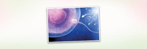 3 semanas de gravidez - A fecundação