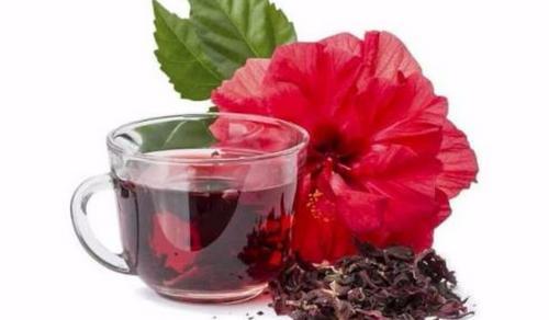 Chá de hibisco e infertilidade, tem alguma relação?