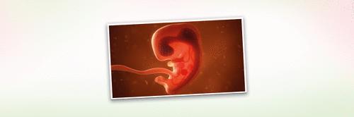 4 semanas de gravidez